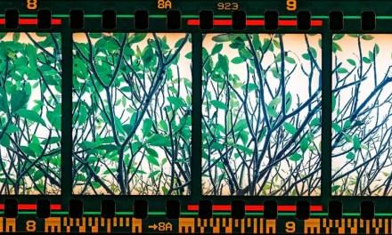 Quadriptych – Fujicolor Industrial 400 (35mm)