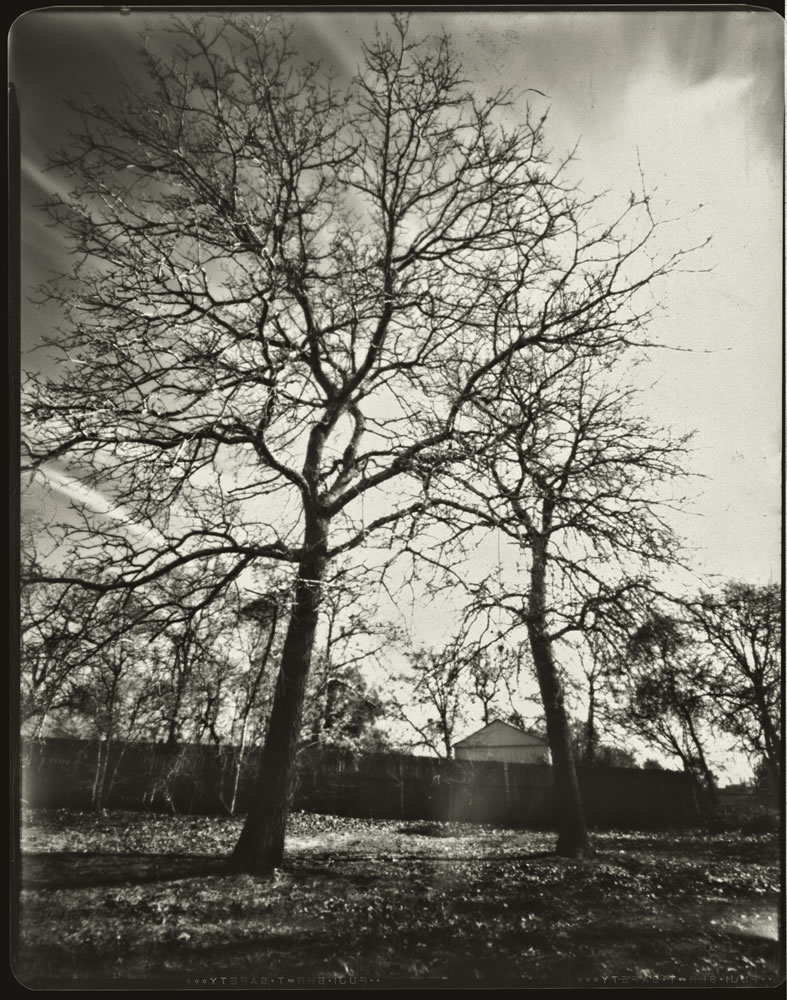 Trees in yard 8x10 pinhole - Bobby Kulik