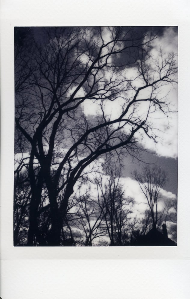 Photographer: Andy Jenkins Title: Rain Followed Location: Dublin, Ohio, USA Camera: Fuji Instax Mini 50s