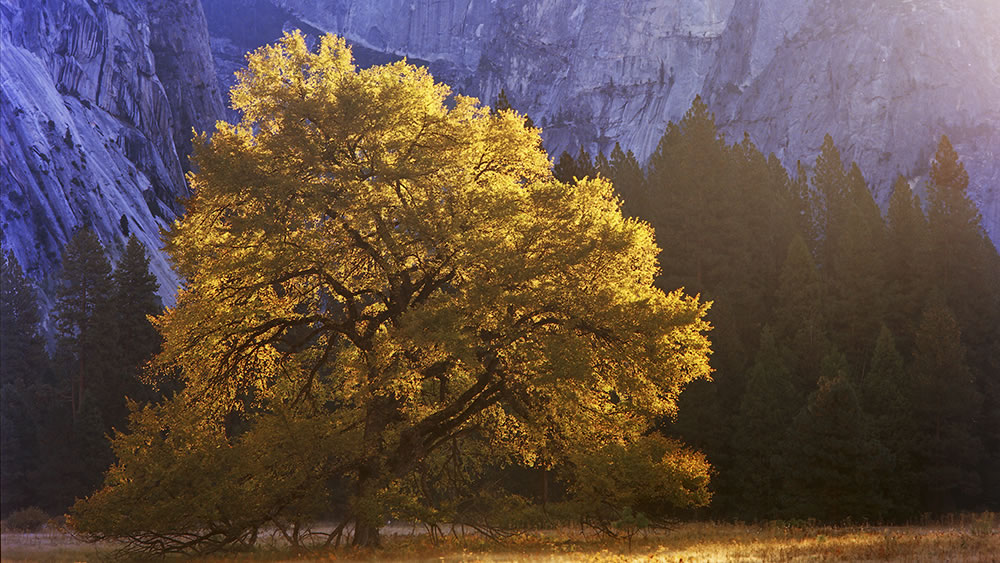 Pentax 645 - Cook's Elm Tree - Pentax-A 645 45mm - Kodak Ektar 100