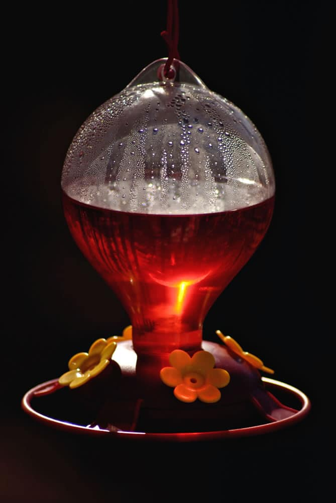 Hummingbird feeder with reflection of sun and trees