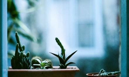 Succulent display – Kodak Portra 400VC (120)