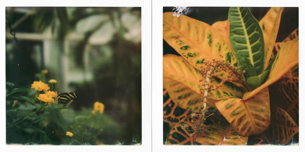 Impossible Project G3 600 film, Polaroid SLR