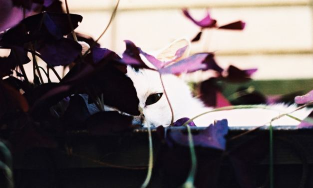 Black eye – Kodak PROFESSIONAL ELITE Chrome 100 – EB-3 (35mm)