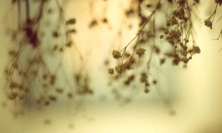Hung to dry – Kodak EKTACHROME 200 – E200 (120)