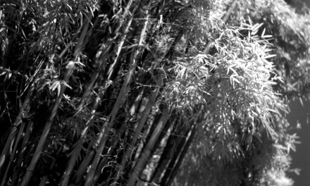 To the light – Rollei INFRARED 400 (4×5)