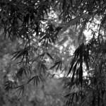 Afloat – Bergger Pancro 400 (120)