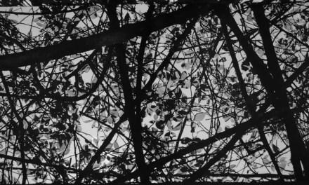 Translucent – Shot on FILM Ferrania FERRANIA P30 Alpha (35mm)