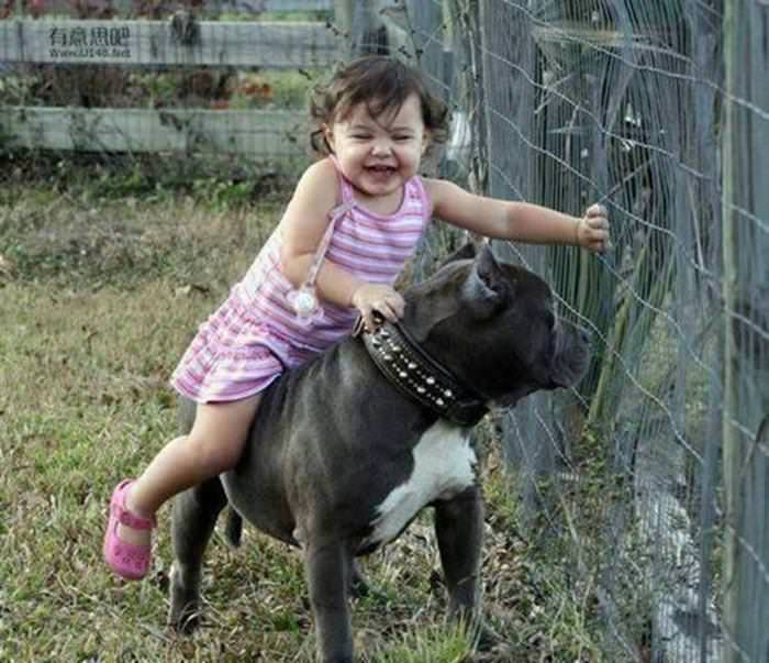 No better childhood friends than dogs Cute overload - BabaMail - pet babysitter