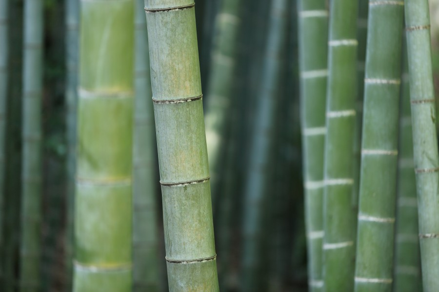 Apple Iphone X Wallpaper From Commercial Image Of Bamboo Forest Free Photo 100008878