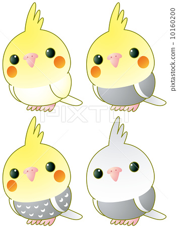 Cute Images For Phone Wallpaper 玄鳳鸚鵡 雞尾鸚鵡 寵物 插圖素材 10160200 Pixta圖庫