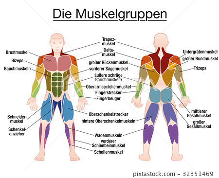 Muscle Diagram German Text Male Body - Stock Illustration 32351469