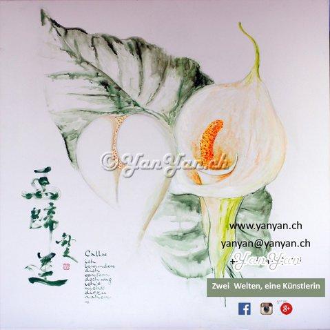 resize-calla-pflanzen