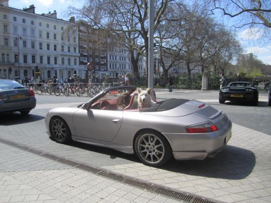 Ena London Dog on Ride