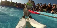 Twiggy-the-Waterskiing-Squirrel