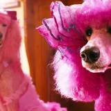 WATCH: Pudsey The Dog: The Movie Trailer