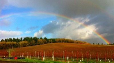 Illahe rainbow