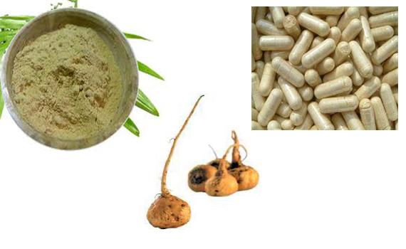 MACA (Macafem for Menopause and Libido)