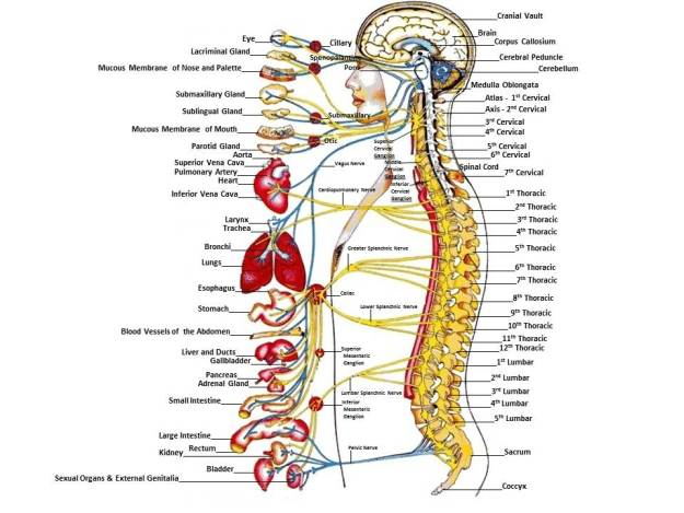 You Autonomic System is wired up to the whole sound system.