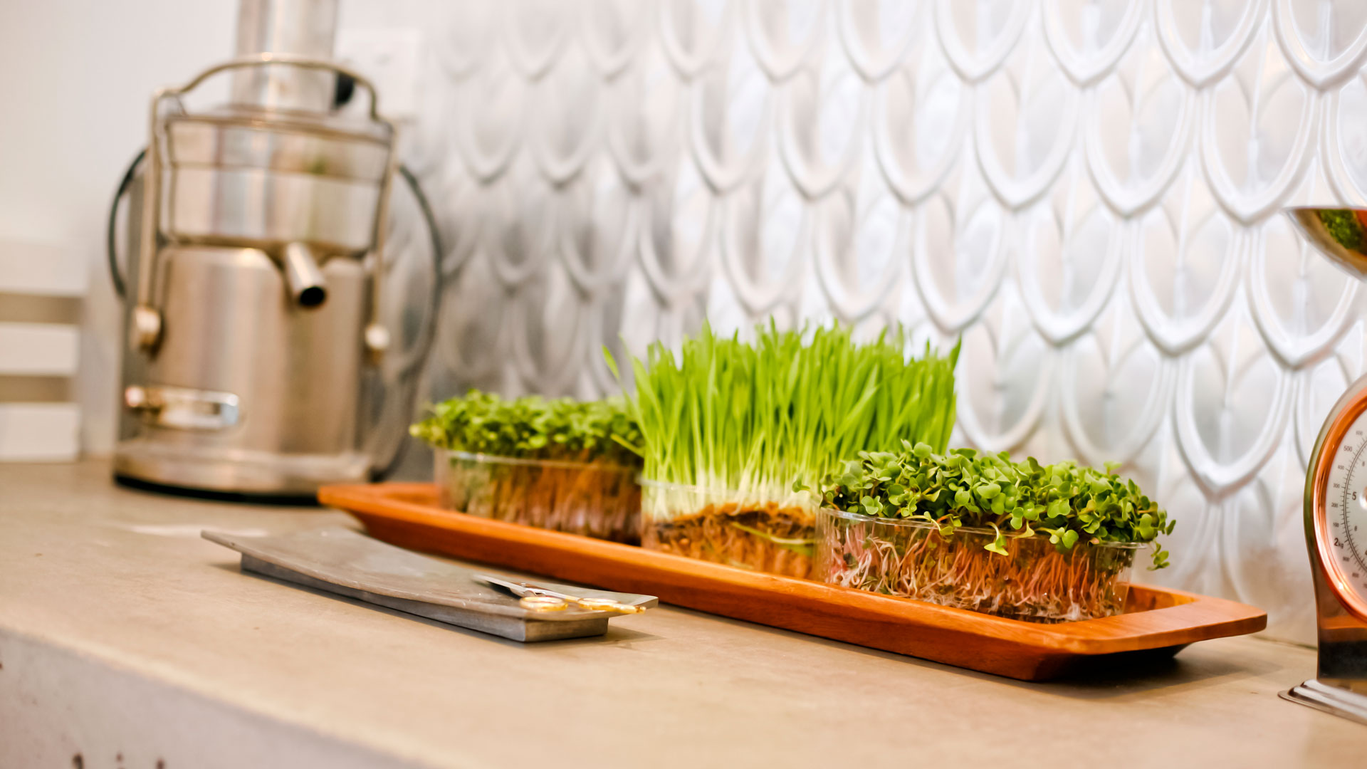 Live-Sprouts-at-home