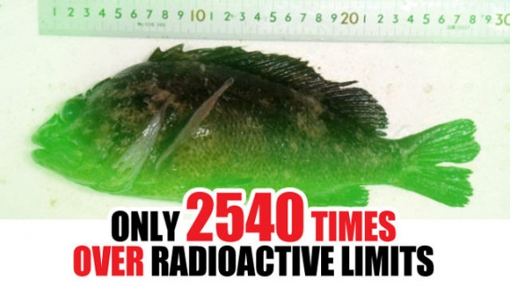 Radioactive fish