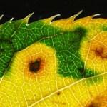 bionisches-blatt-kuenstliche-photosynthese
