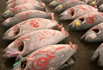 Tsukiji Wholesale Fish Market Opens First Auction Of The New Year