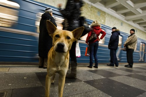 Dog in Moscows Metro - pic from English Russia