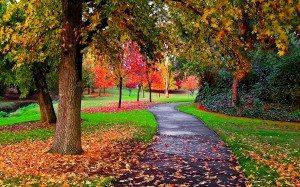 Blog_Autumn Image