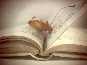Blog_Idiom_Take a Leaf out