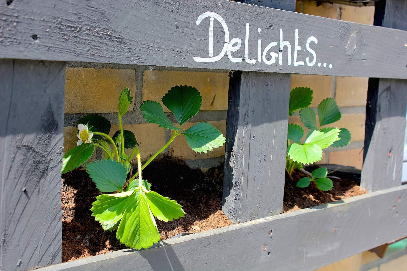 Verticale Tuin Pallet Diy Strawberry Delights Pallet Enjoy The Good Life