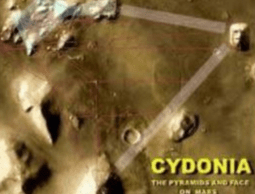 Cyndonia