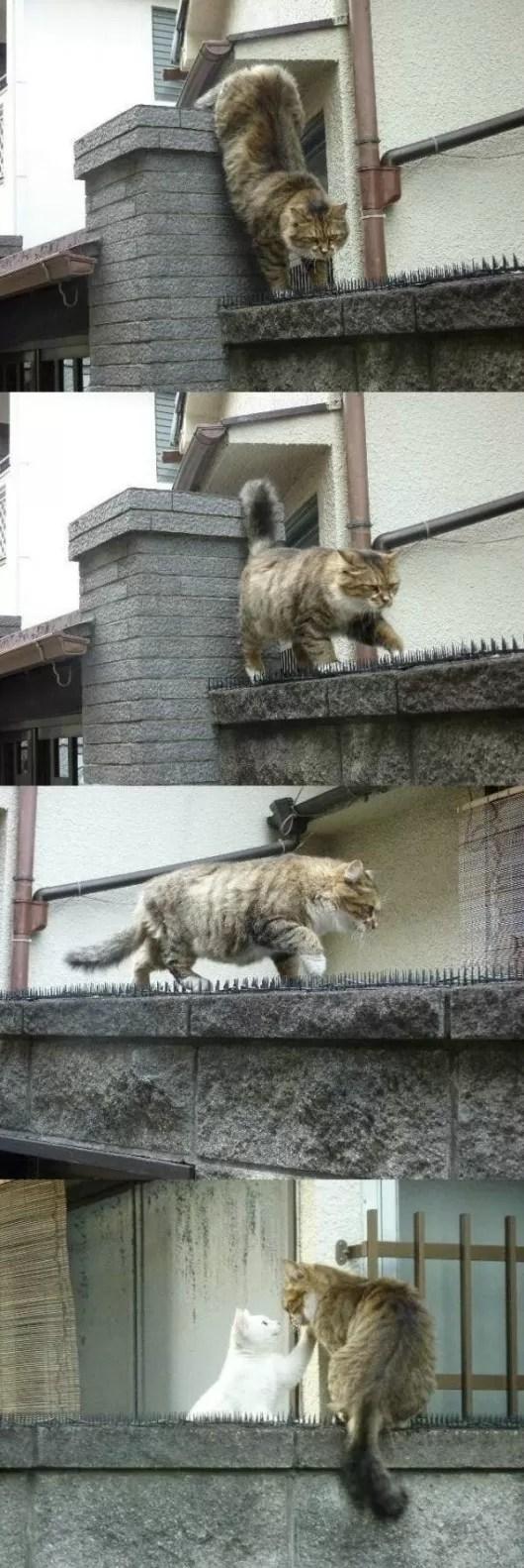 OD gatos