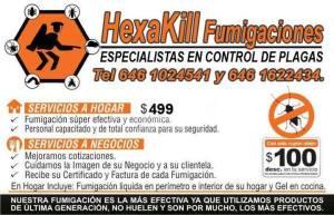fumigaciones hexakill