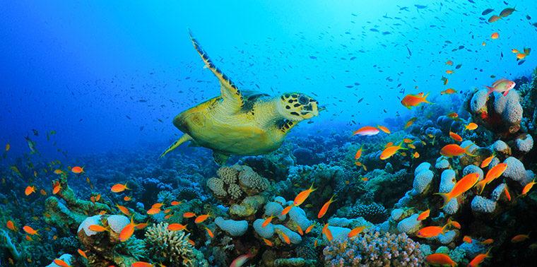 Summer Desktop Wallpaper Hd How Listening To The Ocean Can Help Reveal Environmental