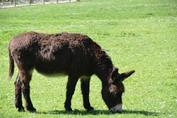 One of the several donkeys