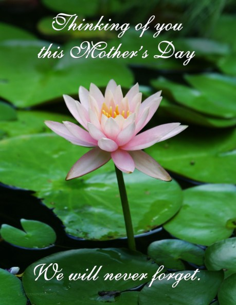 Mothers-Day-Flower