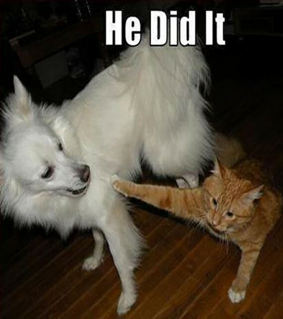 Really Cute Dog Wallpaper 15 Funny Cat And Dog Pics With Captions Entertainmentmesh