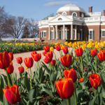 © Thomas Jefferson Foundation at Monticello, photo by Jack Looney