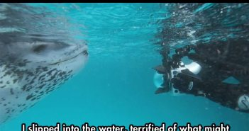 leopard-seal-incident-1