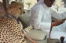 1-crazy-pics-of-dubai-showing-what-money-can-do