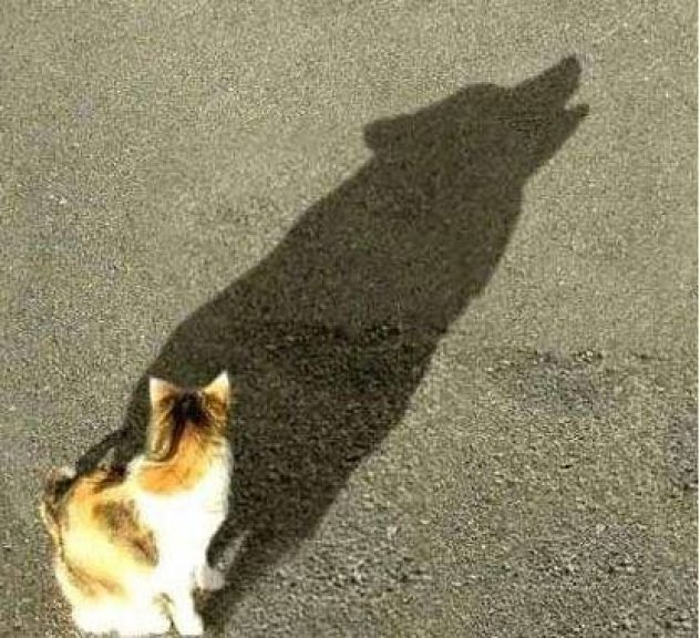 1-shadows-showing-nothing-is-what-it-seems