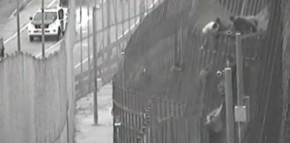 Varios inmigrantes intenta llegar a Melilla saltando la valla./ G.C