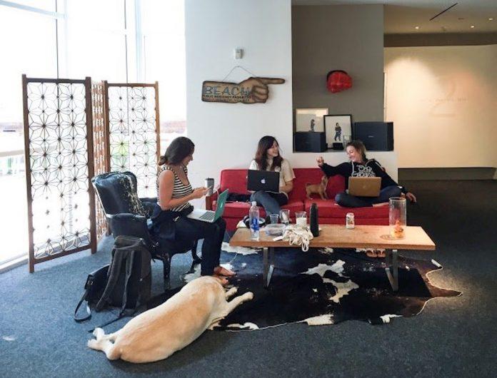 binatang hewan peliharaan di kantor Tradesy