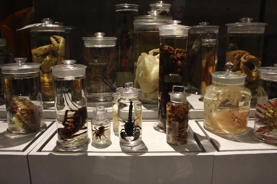 Quelques petites bébêtes du musée australien à Sydney!!!!!