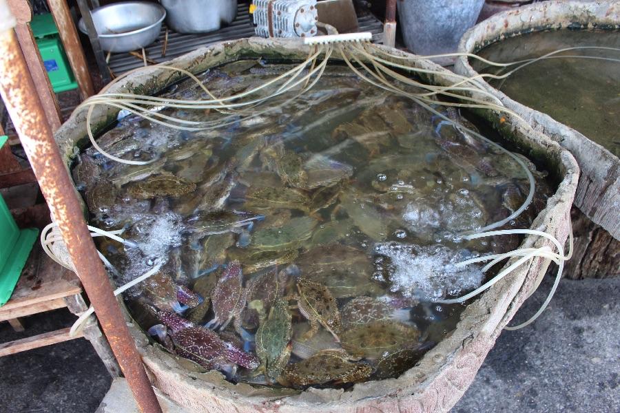 crabes-avant-kep