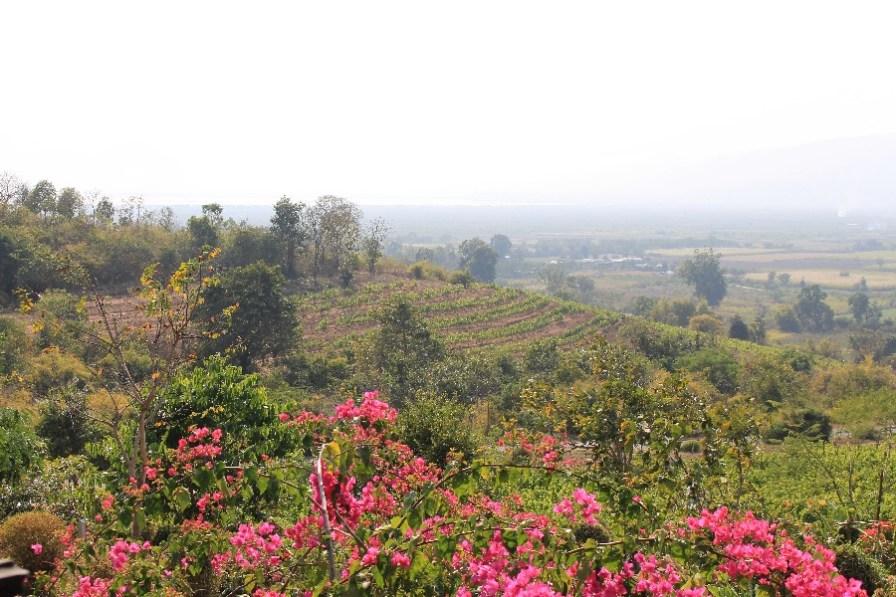 La vue depuis la terrasse.