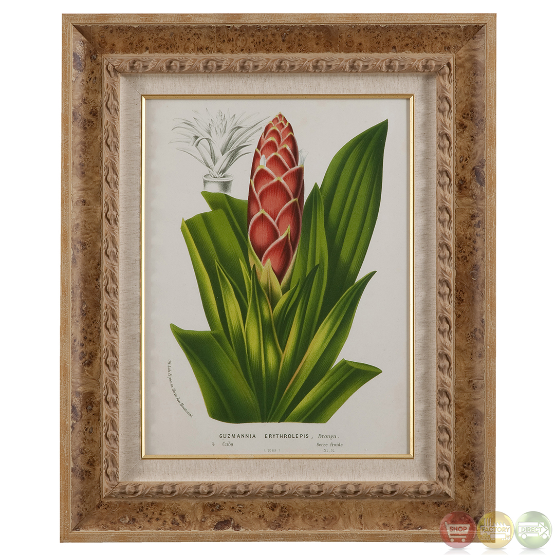 Tropical Artwork Tropical Bromeliad Traditional Framed Artwork 9900 192aec