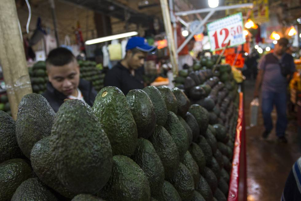 Avocado Boom Mexican Economy: Is Mexico's Avocado Boom Sustainable