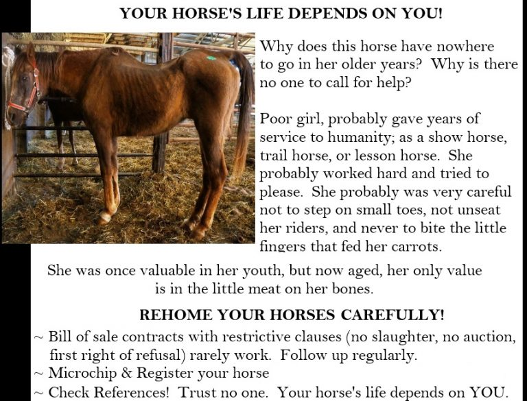 Selling your horse \u2013 Equine Rescue Network - horse sales contracts